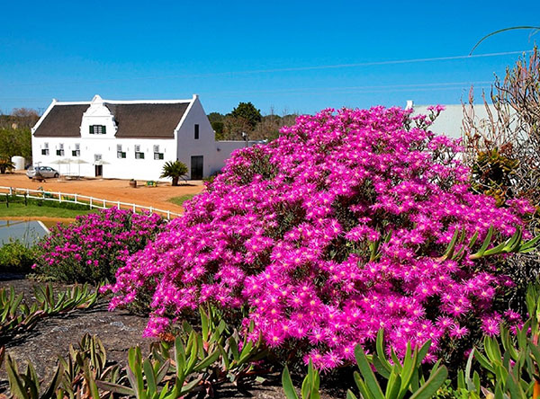 Groote Post Cellar and Tasting Centre ablaze in colour